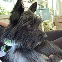 Adopt A Pet :: Carlos - San Diego, CA