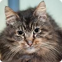 Adopt A Pet :: Harvard - Grand Ledge, MI