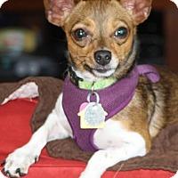 Adopt A Pet :: Tex - Puppy - Dallas, TX