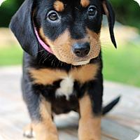 Adopt A Pet :: Grace - Waldorf, MD