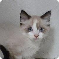 Adopt A Pet :: Evan - Massapequa, NY