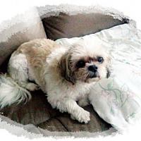 Adopt A Pet :: Penny 3121 - Toronto, ON