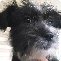 Adopt A Pet :: Willa - Medora, IN
