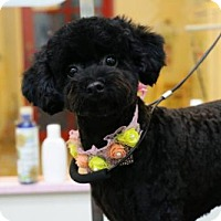 Adopt A Pet :: Omima - Vancouver, BC