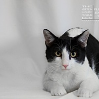 Adopt A Pet :: ATTICUS - Houston, TX