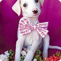 Adopt A Pet :: Koa - Irvine, CA