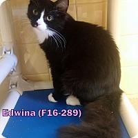 Adopt A Pet :: Edwina - Tiffin, OH