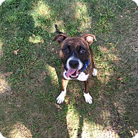 Adopt A Pet :: Ryker - Bernardston, MA