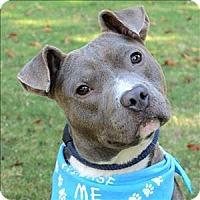 Adopt A Pet :: Trish - Raleigh, NC