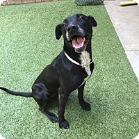Adopt A Pet :: Faith - Covington, LA