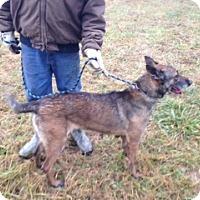 Adopt A Pet :: Carnita - Germantown, MD