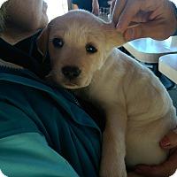 Adopt A Pet :: Simon - Ogden, UT