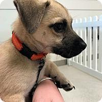 Adopt A Pet :: Tippee - Sudbury, MA
