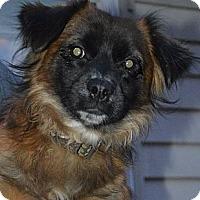 Adopt A Pet :: Ozzie - LaGrange, OH