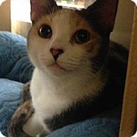 Adopt A Pet :: Bijue - Monroe, GA