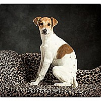 Adopt A Pet :: Joy - Owensboro, KY