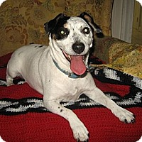 Adopt A Pet :: Millie - Thomasville, NC