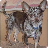 Adopt A Pet :: Stewie - Rigaud, QC