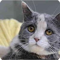 Adopt A Pet :: Dahlia - Columbus, OH