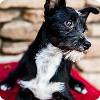 Adopt A Pet :: Marty - Scottsdale, AZ