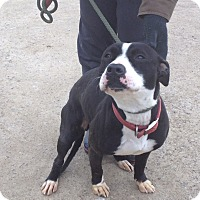 Adopt A Pet :: #442-14 @ Animal Shelter - Zanesville, OH