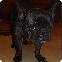 Adopt A Pet :: Beau ( aka Porkchop) - Winchester, VA