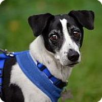 Adopt A Pet :: Ozzie - San Francisco, CA
