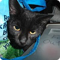 Adopt A Pet :: Fiona - Walkersville, MD