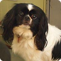 Adopt A Pet :: Amelia - Prole, IA