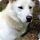 Adopt A Pet :: Rocko B