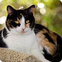 Adopt A Pet :: Merryweather 13406 - Atlanta, GA