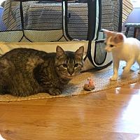 Adopt A Pet :: Melanie - Bentonville, AR