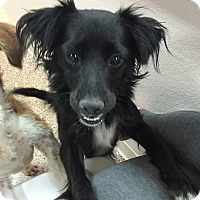 Adopt A Pet :: Roxie - Las Vegas, NV