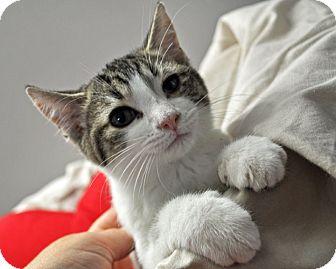 best time to neuter a cat