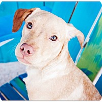 Adopt A Pet :: Benji - Lake Charles, LA