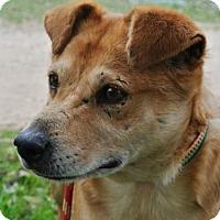 Adopt A Pet :: Dexter - Bulverde, TX
