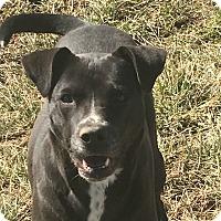Adopt A Pet :: Charlotte - Russellville, KY