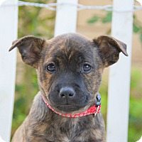 Adopt A Pet :: Taylor von Betty - Thousand Oaks, CA