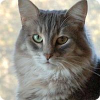 Adopt A Pet :: Ollie - Davis, CA