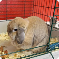 Adopt A Pet :: Mr. P.B. - Elyria, OH