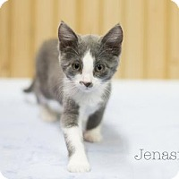 Adopt A Pet :: Jenasi - West Des Moines, IA
