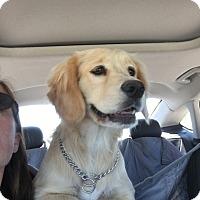 Adopt A Pet :: Dulce - Las Vegas, NV