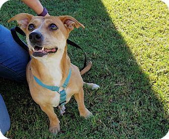 Dachshund Mix Dog for adoption in Phoenix, Arizona - AGATHA