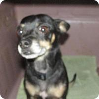 Adopt A Pet :: Regis - Rocky Mount, NC