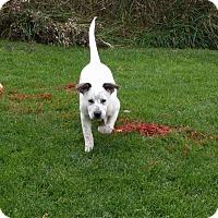 Adopt A Pet :: Jackie - Caro, MI