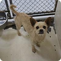 Adopt A Pet :: A23 Adam - Odessa, TX