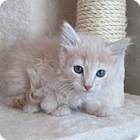 Adopt A Pet :: Winda - San Bernardino, CA