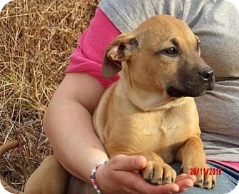 Great Dane/Shepherd (Unknown Type) Mix Puppy for adoption in Sussex, New Jersey - Tink (14 lb) Pretty Pup!