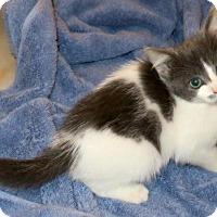 Adopt A Pet :: Camellia - Bedford, VA