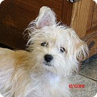 Adopt A Pet :: Allie (7.5 lb) Precious Baby! - SUSSEX, NJ
